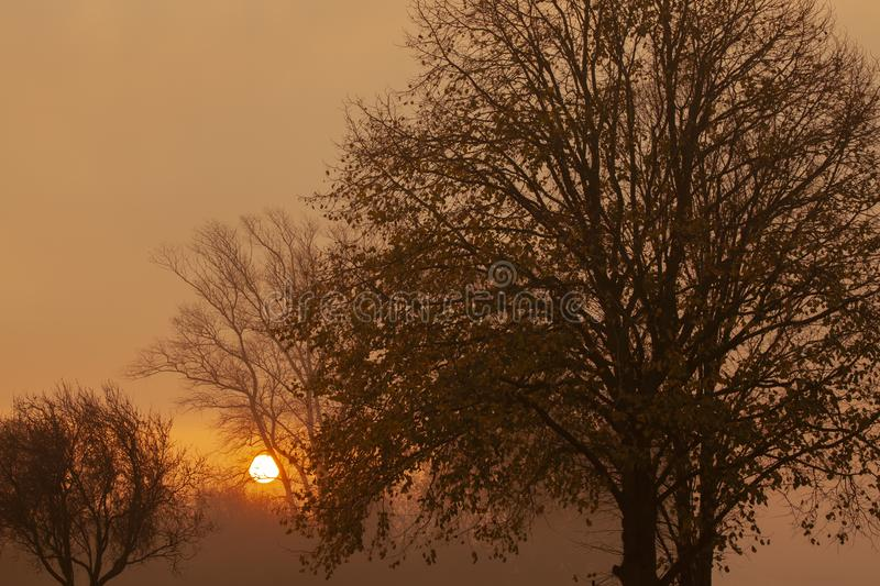 Misty morning sunrise rural landscape. Misty sunrise through beautiful autumn trees. Relaxing natural landscape at dawn with bare trees royalty free stock images