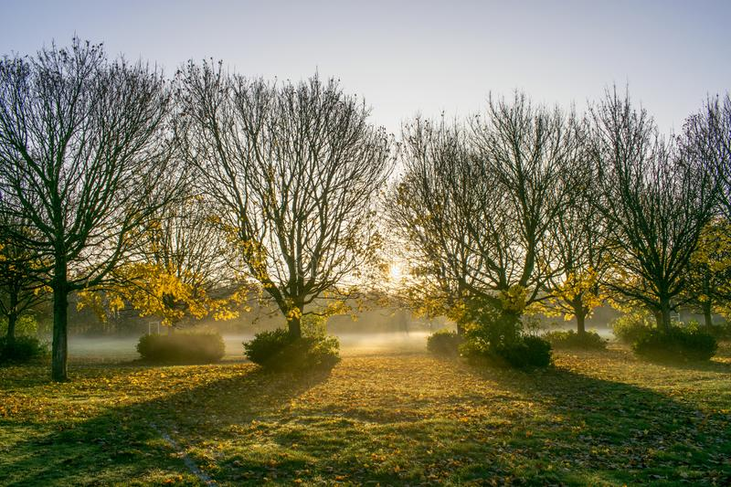 Misty Morning Sunrise Through Trees imagem de stock
