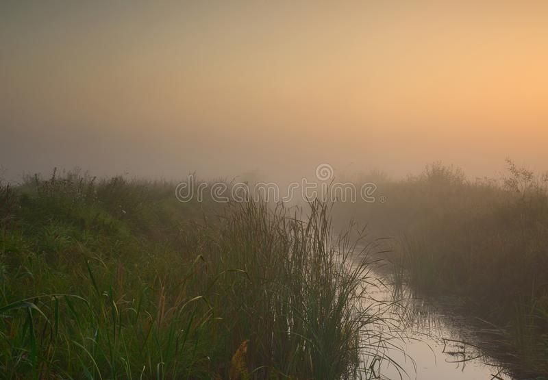 A misty morning in the swamps stock photo