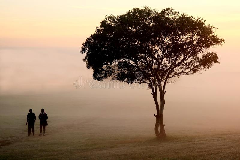Misty Morning Walk. Two people walking past a tree on an early misty morning royalty free stock photography