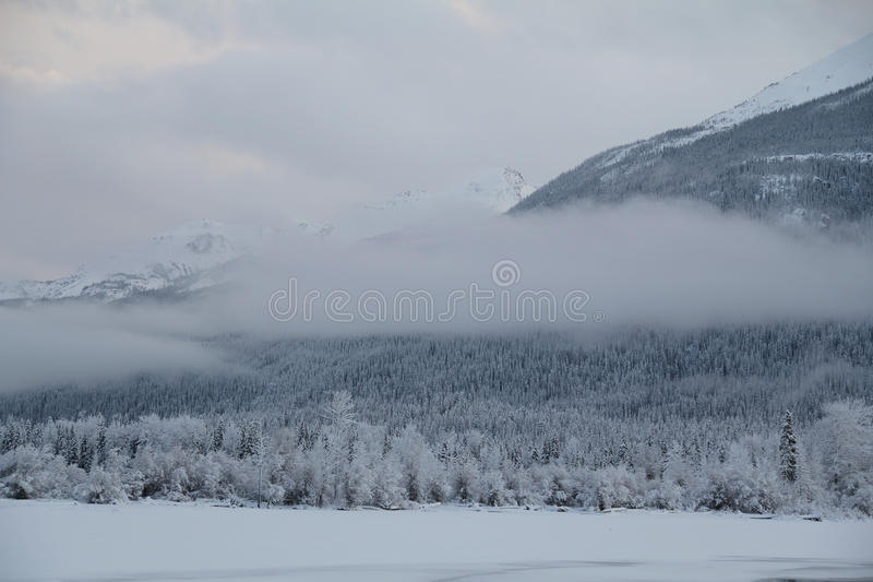 Download Misty mountain stock photo. Image of trees, lake, covered - 24252950