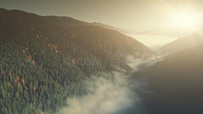 Misty mountain coniferous forest slope aerial view royalty free stock images