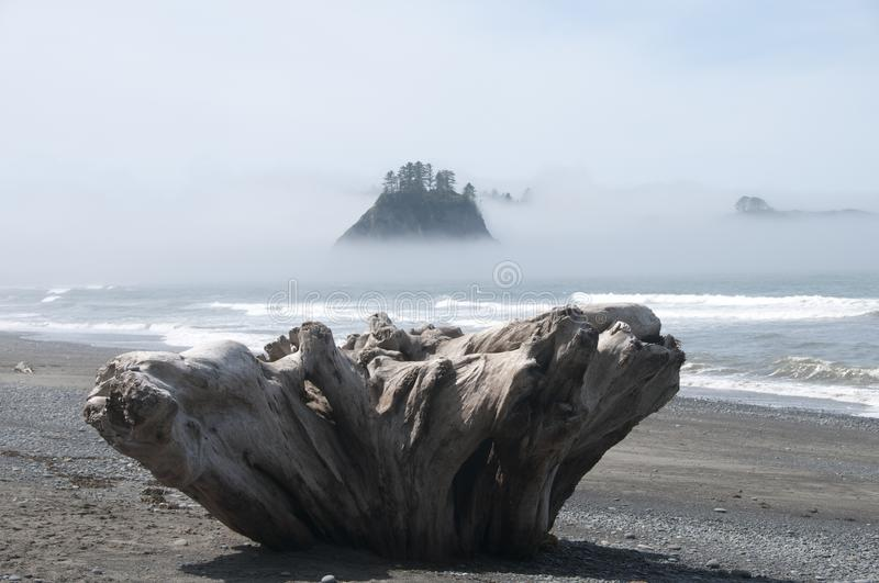 Misty Mountain Island with Driftwood at Rialto Beach. Olympic National Park, WA. Driftwood on the seashore at Rialto Beach with misty mountain islands. Olympic stock photos