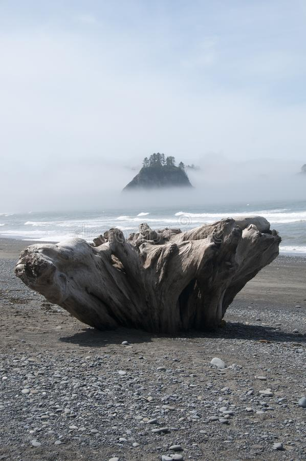 Misty Mountain Island with Driftwood at Rialto Beach. Olympic National Park, WA. Driftwood on the seashore at Rialto Beach with misty mountain islands. Olympic stock images