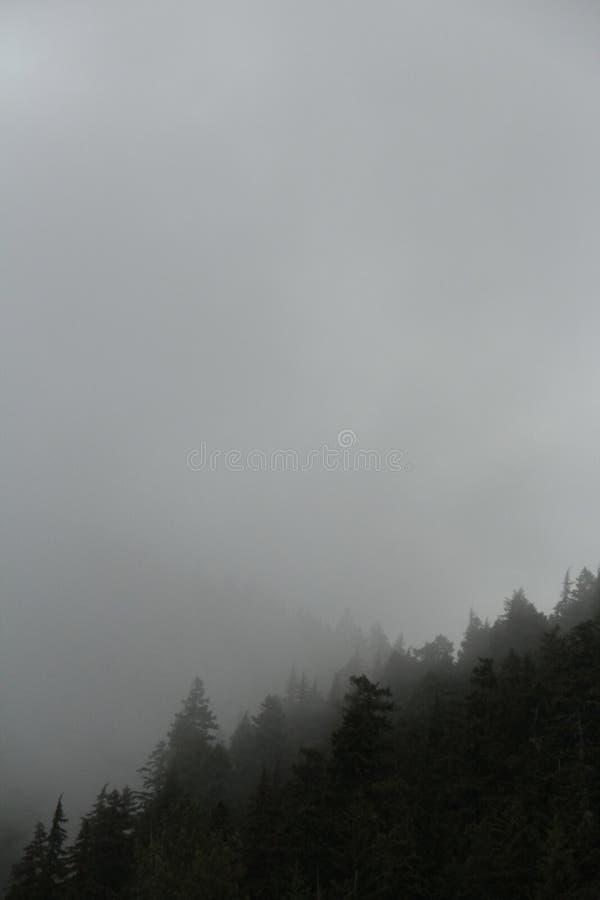 Misty Mountain Morning foto de archivo