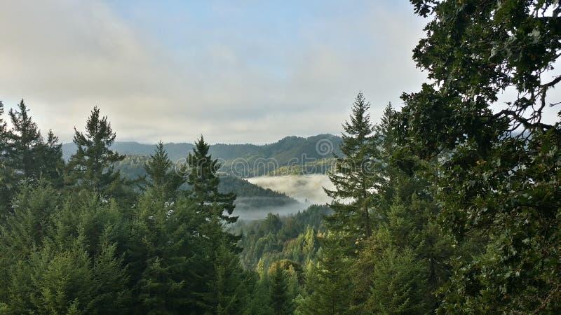 Misty mountain morning royalty free stock image