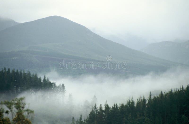 Misty Mountain-Weg in der Natur stockfotografie