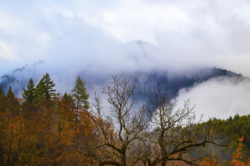 Misty mountains - stark tree branches against autumn and evergreen trees and fog on the distant mountains stock image