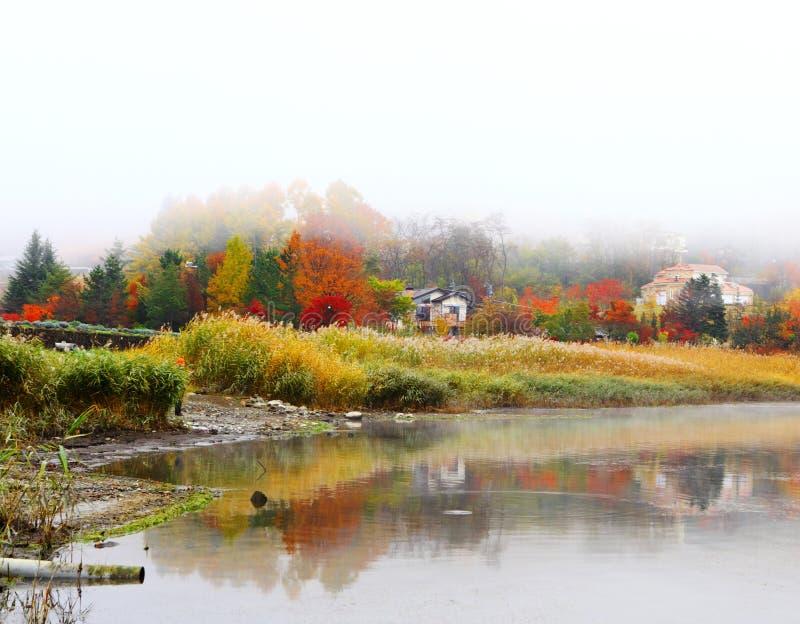 misty nad jezioro zdjęcia royalty free