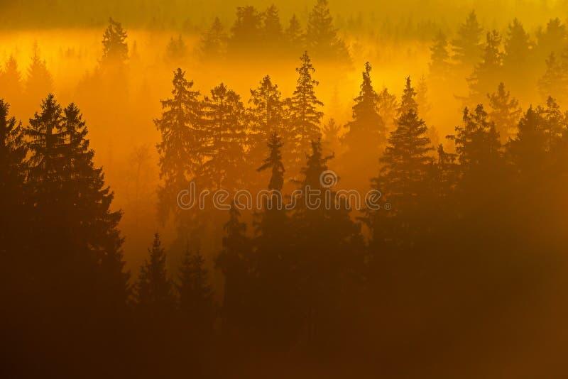 Misty orange morning landscape. Sun during sunrise in Czech national park Ceske Svycarsko. Beautiful landscape with forest and fog royalty free stock photography