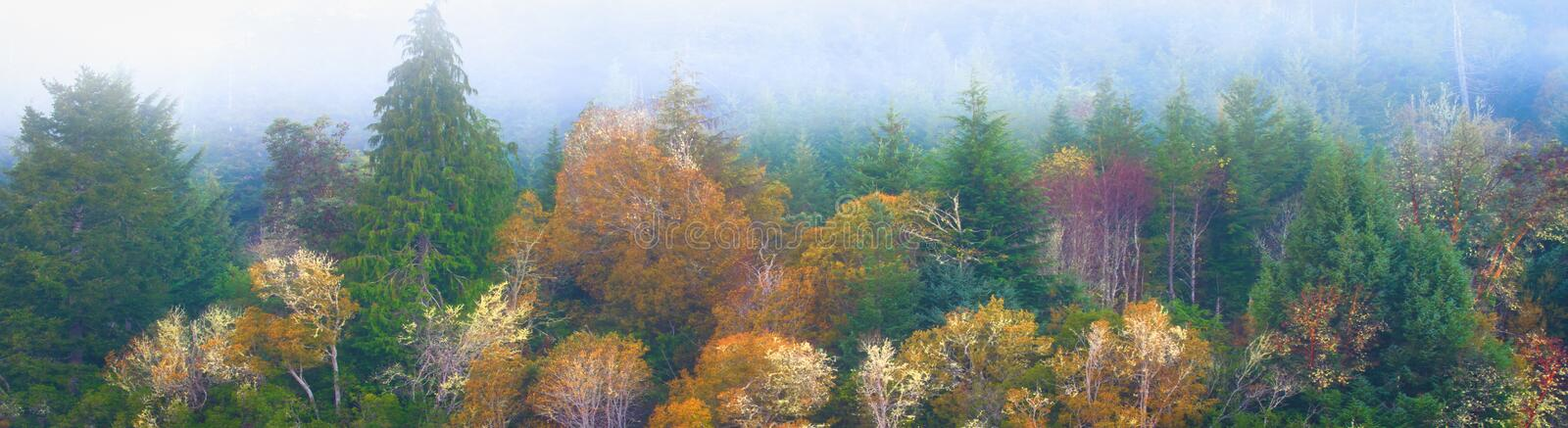 Misty Oregon Forest Fall Picture photo stock