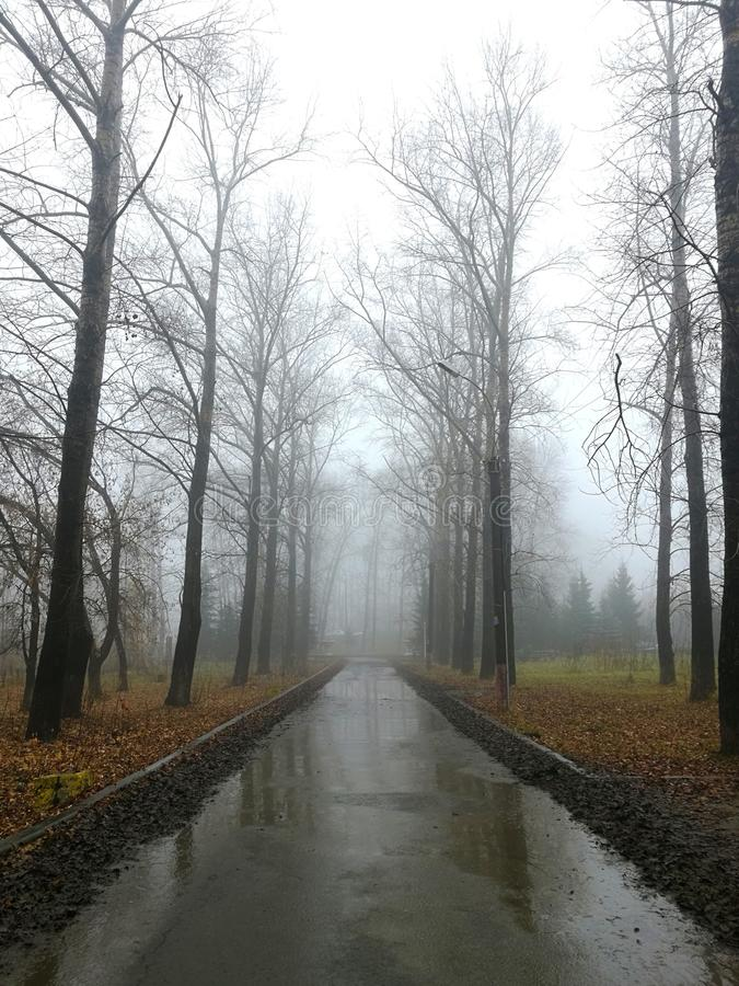 Misty Park fotografia stock libera da diritti