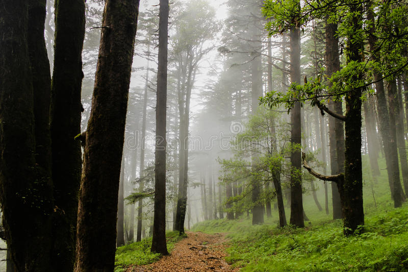 The misty paths royalty free stock photos