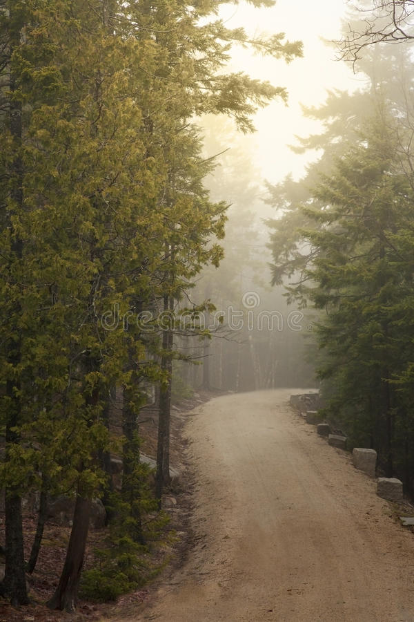 Misty Pine Forest Carriage Road royaltyfri bild
