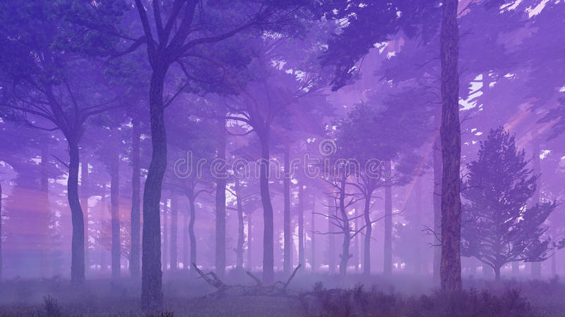 Misty pine forest at sunset. Scenic mysterious pine forest at foggy dawn or dusk. Woodland scene 3D illustration was done from my own 3D rendering file stock illustration