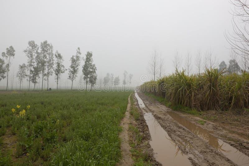 Misty Punjabi-fieldscape lizenzfreie stockbilder