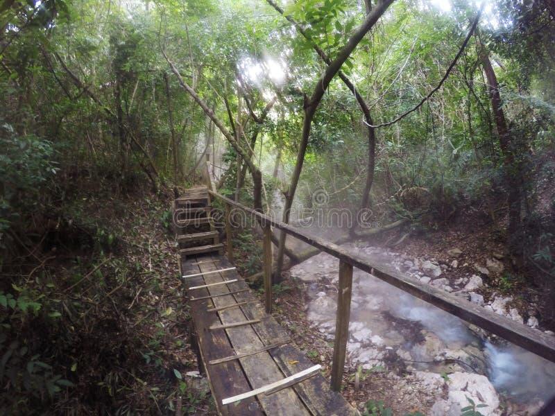 Misty Rain Forest lizenzfreie stockbilder
