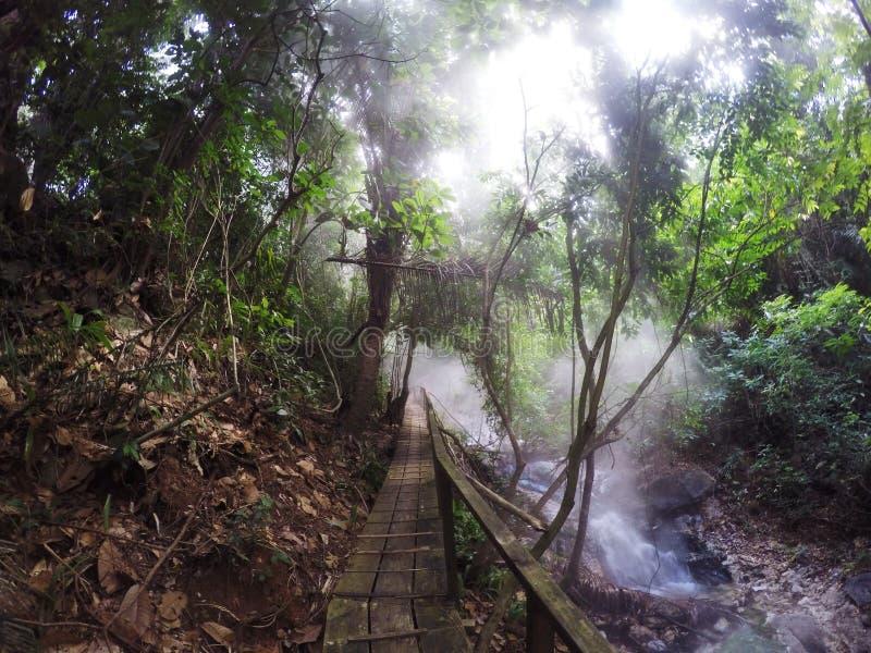 Misty Rain Forest immagine stock