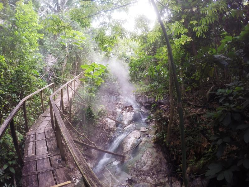 Misty Rain Forest fotografia stock