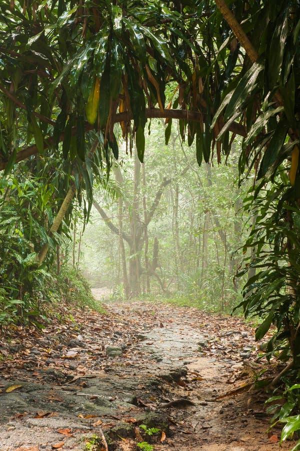 Misty Rain Forest fotos de archivo
