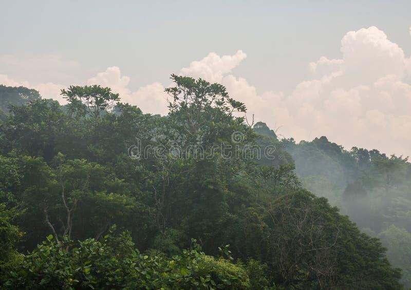Misty Rain Forest fotografía de archivo