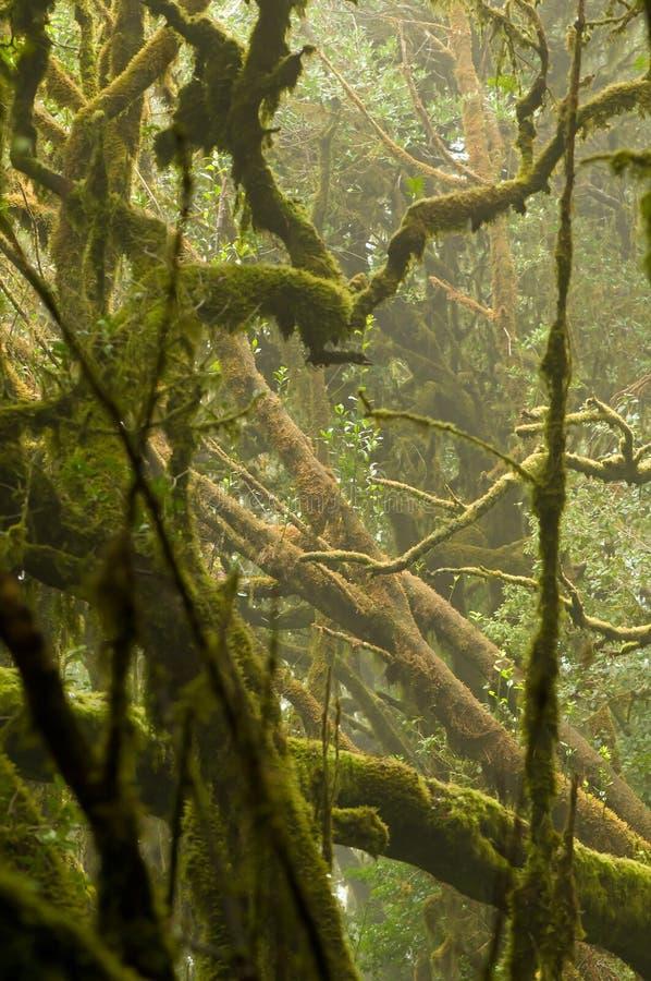 Misty rainforest royalty free stock photos
