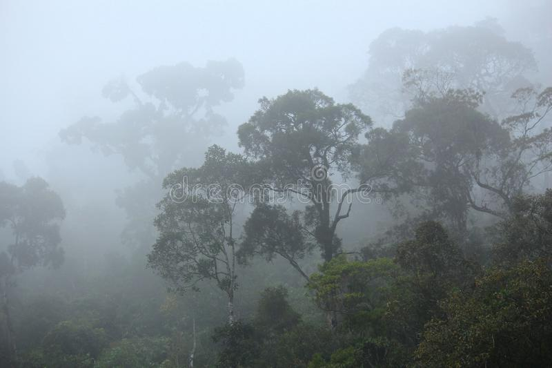 Misty rainforest. Brazil - misty jungle in Mata Atlantica (Atlantic Rainforest biome) in Serra dos Orgaos National Park (Rio de Janeiro state stock photography