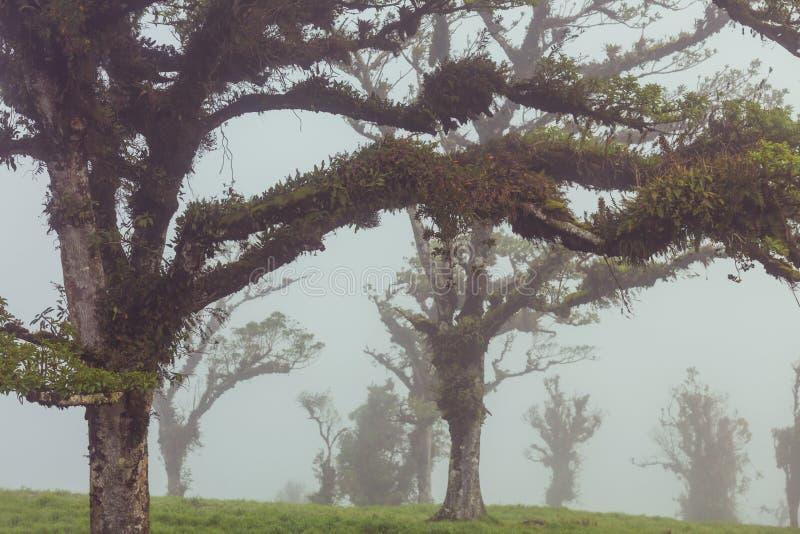 Jungle in Costa Rica. Misty Rainforest in Costa Rica, Central America stock photos