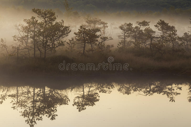 misty rano bagno fotografia stock