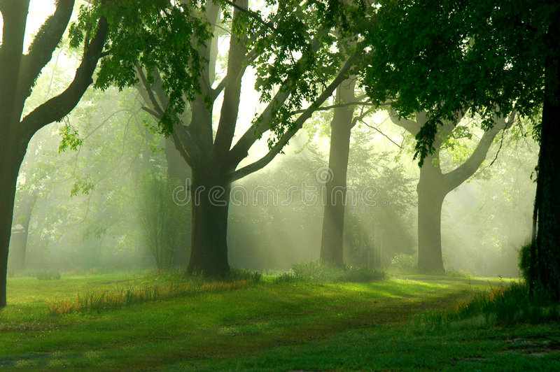 misty rano na spacer obraz royalty free