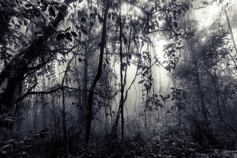 Misty regnskogs vintage-format royaltyfria bilder