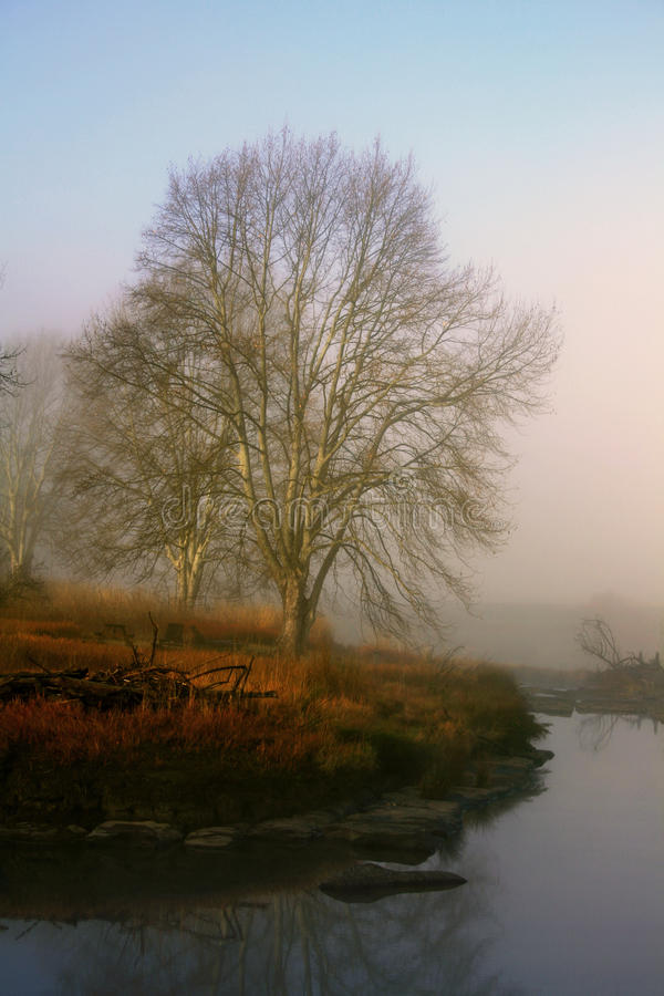 Misty River arkivbild