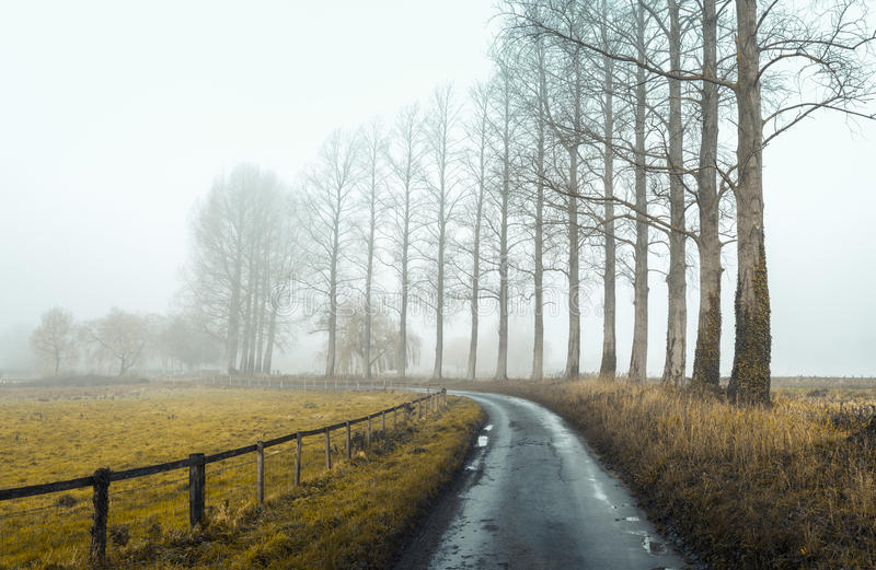 Misty Road 2 immagine stock