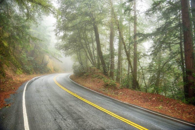 Misty Road Through Redwoods imagem de stock