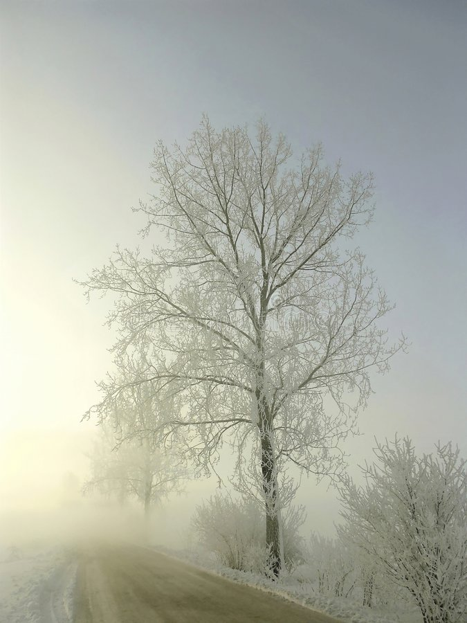 Download Misty Road In Winter, Frost Covered Tree Stock Image - Image: 7699105