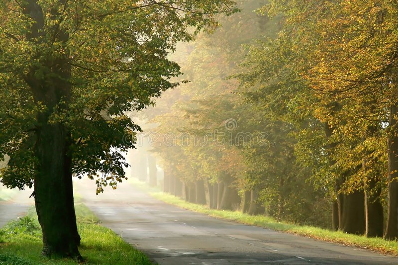 Download Misty Rural Road Through The Autumn Trees Stock Photo - Image of misty, fall: 8381430