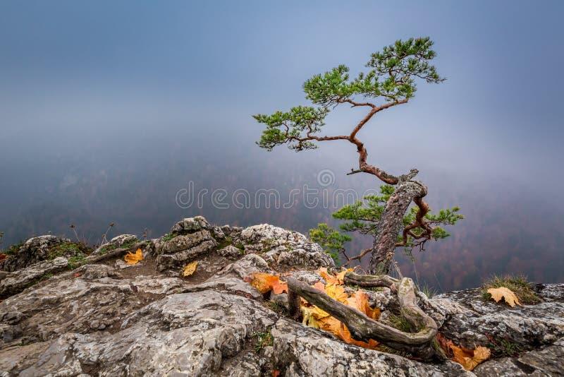 Misty Sokolica peak in Pieniny mountains in autumn, Poland. Europe stock images