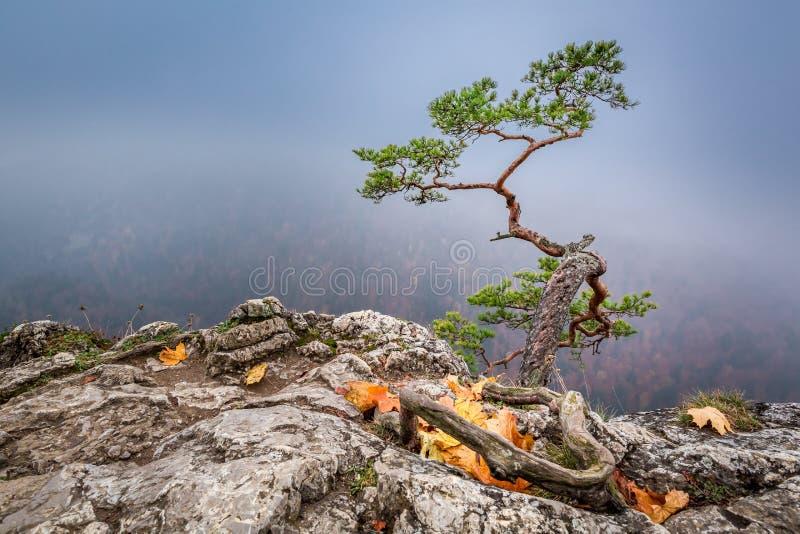 Misty Sokolica peak in Pieniny mountains at sunrise in autumn. Europe stock image