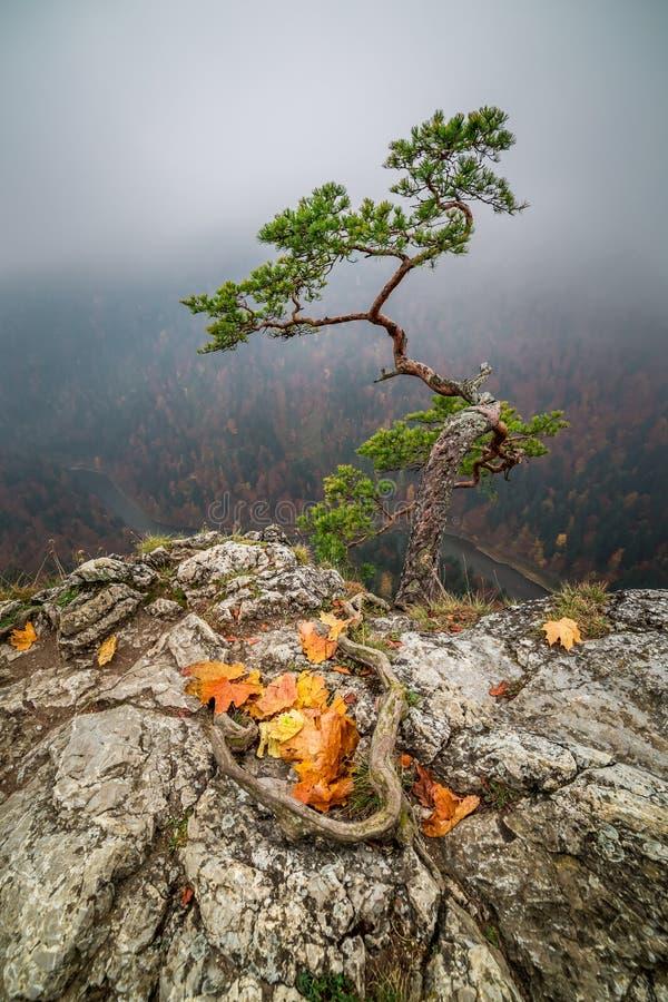 Misty Sokolica peak in Pieniny mountains at sunrise in Poland. Europe stock image