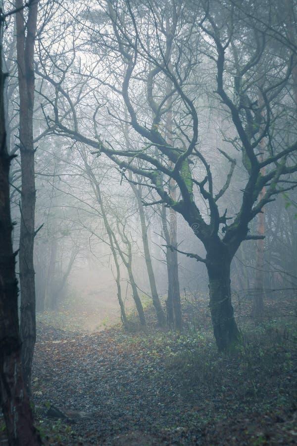 Misty spooky forest stock image