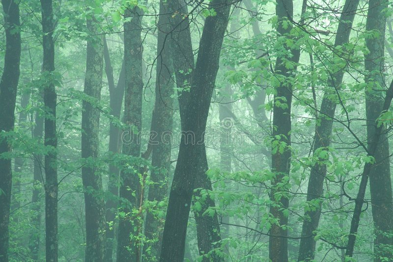 Misty spring morning royalty free stock images