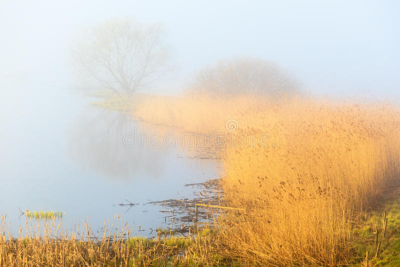 Misty spring morning lake stock image