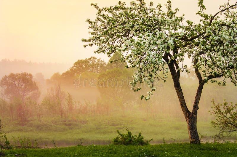 Misty Spring morning royalty free stock photo
