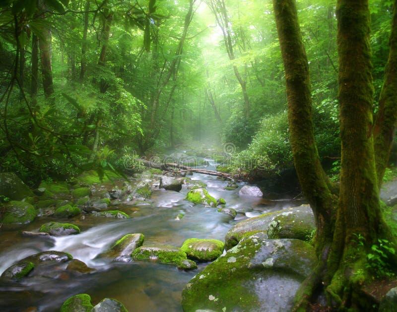 misty strumień Tennessee obrazy stock