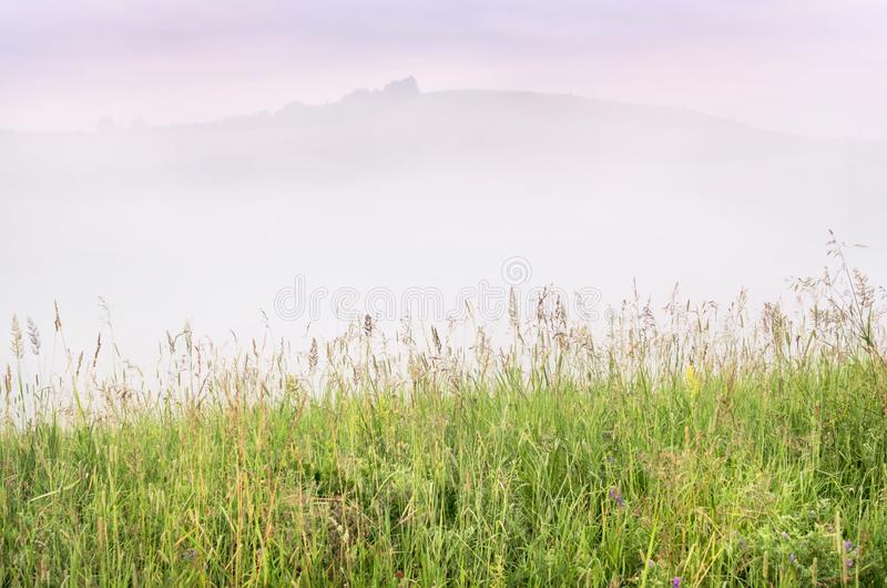 Misty Summer Sunrise in the Mountains: Tall Grass, Thick Fog over a Mountain, Trees and Dramatic Purple Clouds in Background. New stock photo