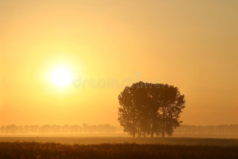 Misty summer sunrise with trees in the field