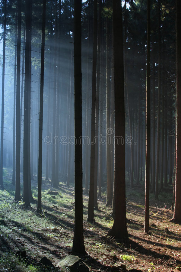 Misty Sunrise Stock Photography