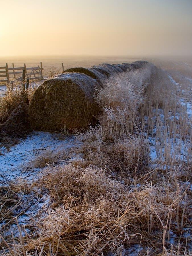 Free Misty Sunrise Stock Photography - 438612