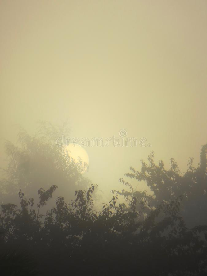 Misty Sunrise au-dessus des arbres photo stock