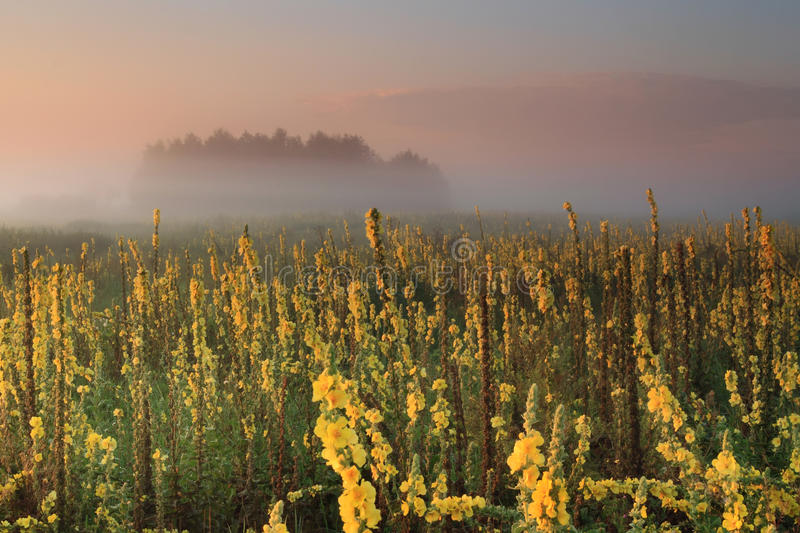 Misty Sunrise On The Field Royalty Free Stock Images